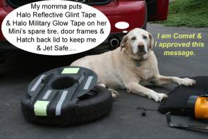 Comet the Yellow Lab gives advice on Halo tapes for Mini Coopers.